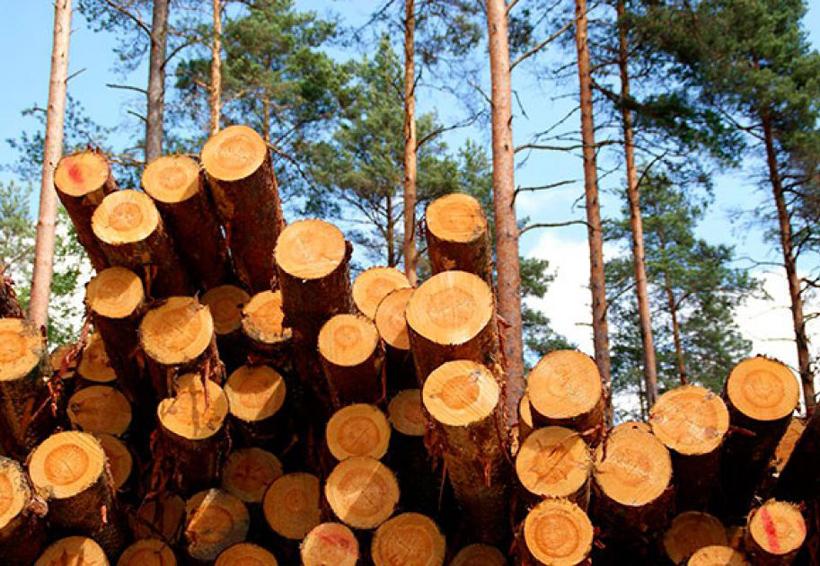 Buscan aumentar la producción maderable en Oaxaca   El Imparcial de Oaxaca