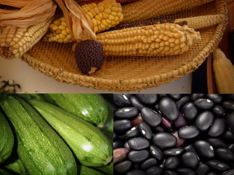 Investigadora lamenta que el maíz, calabaza y frijol pierdan importancia | El Imparcial de Oaxaca