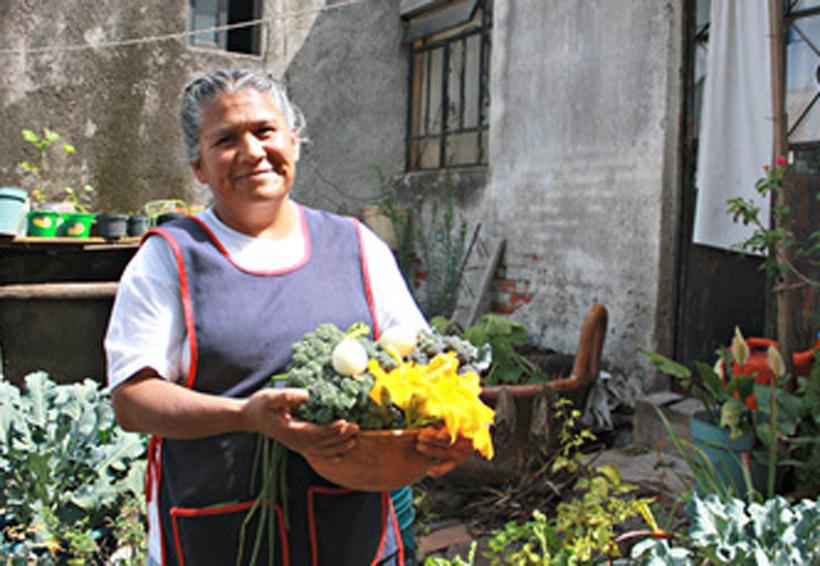 Impulsan huertos y granjas familiares en Oaxaca   El Imparcial de Oaxaca