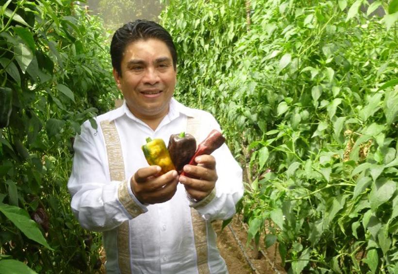 Buscan rescatar   la producción del  chile chilhuacle en la Mixteca de Oaxaca | El Imparcial de Oaxaca