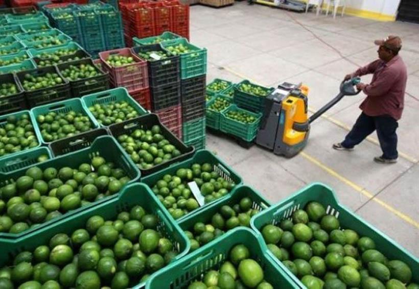 Potencializa Tuxtepec producción de limón | El Imparcial de Oaxaca
