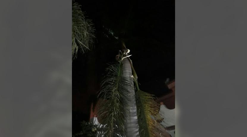 Cae rayo cerca de una casa en Xoxocotlán, Oaxaca | El Imparcial de Oaxaca