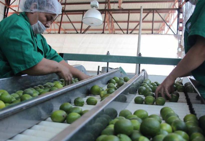 Industria agrícola de Tuxtepec  recibirá inversión privada   El Imparcial de Oaxaca