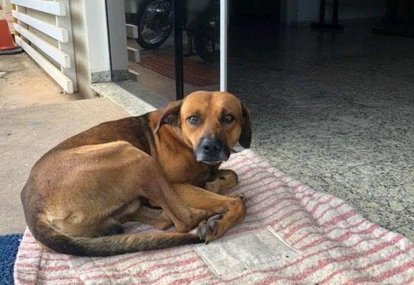 Perro fiel lleva  cuatro meses esperando a su amo en un hospital   El Imparcial de Oaxaca