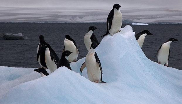 Científicos encuentran 1,5 millones de pingüinos   El Imparcial de Oaxaca