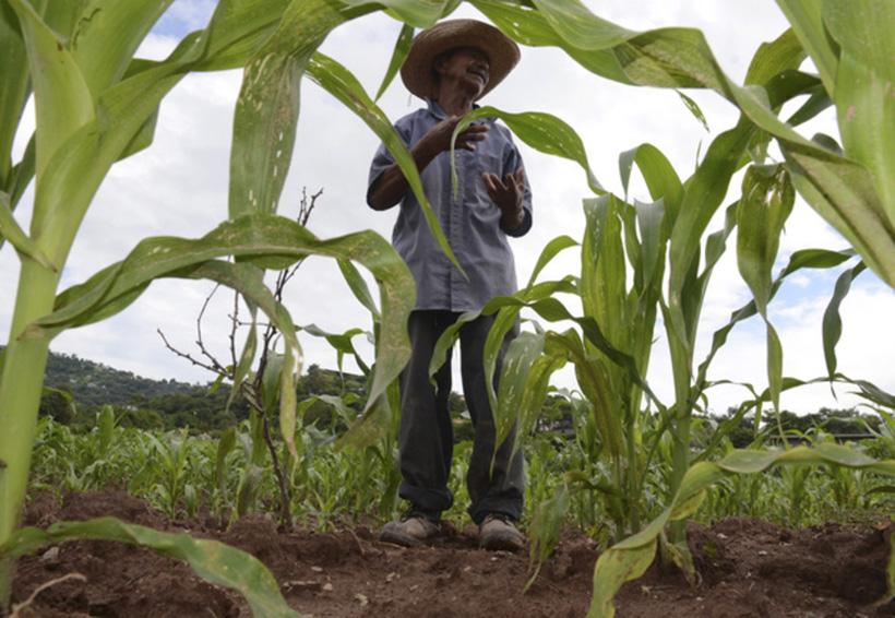 Agroproductores de Oaxaca miran hacia mercado de Tailandia | El Imparcial de Oaxaca