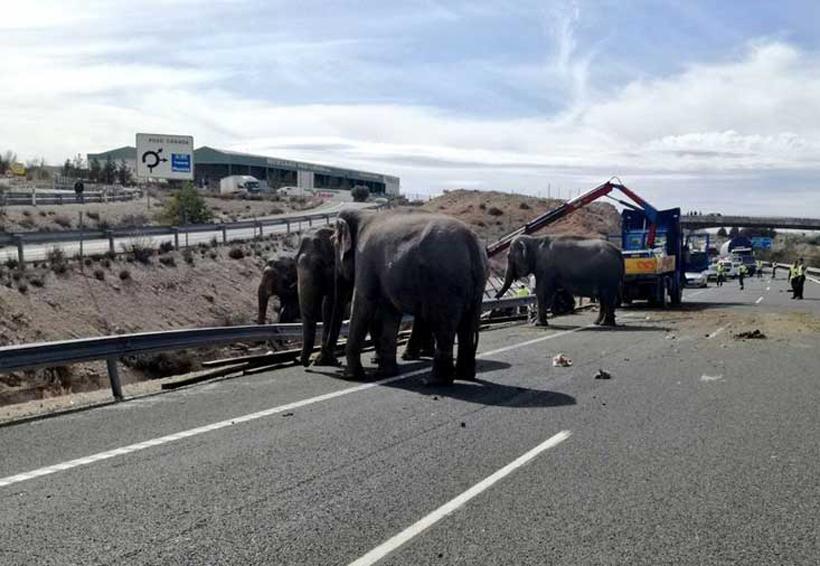 Muere elefante de circo en accidente automovilístico | El Imparcial de Oaxaca