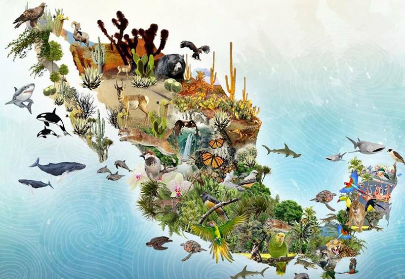 Día Internacional de la Diversidad Biológica: orden y equilibrio   El Imparcial de Oaxaca