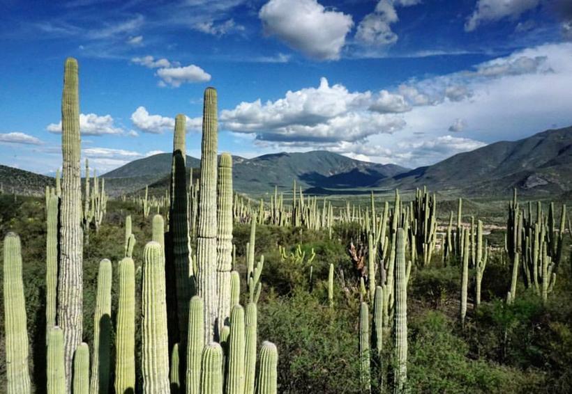 Biósfera Tehuacán-Cuicatlán, patrimonio de la humanidad   El Imparcial de Oaxaca