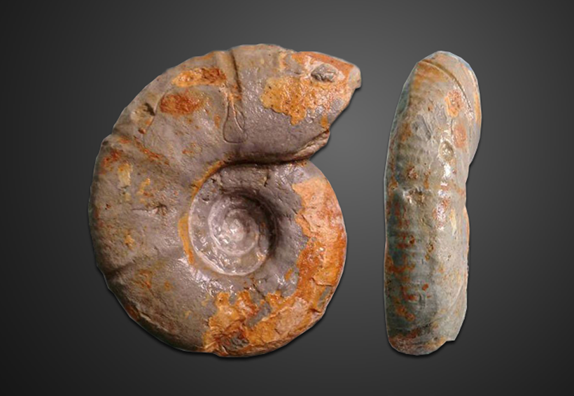 Científicos del IPN descubren fósil único en el mundo | El Imparcial de Oaxaca