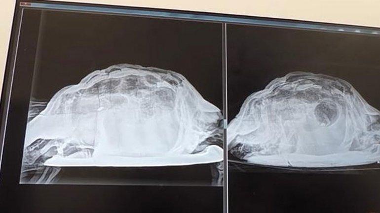 Investigan caso de mujer que fue a fiesta y terminó con una tortuga en la vagina | El Imparcial de Oaxaca