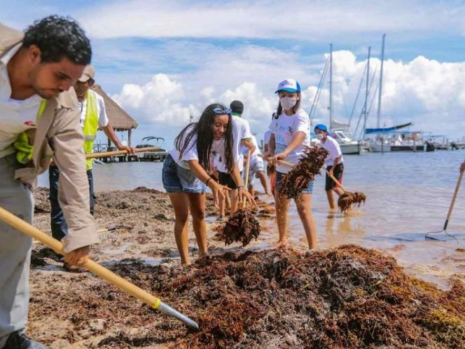 Convierten sargazo en biocombustible | El Imparcial de Oaxaca