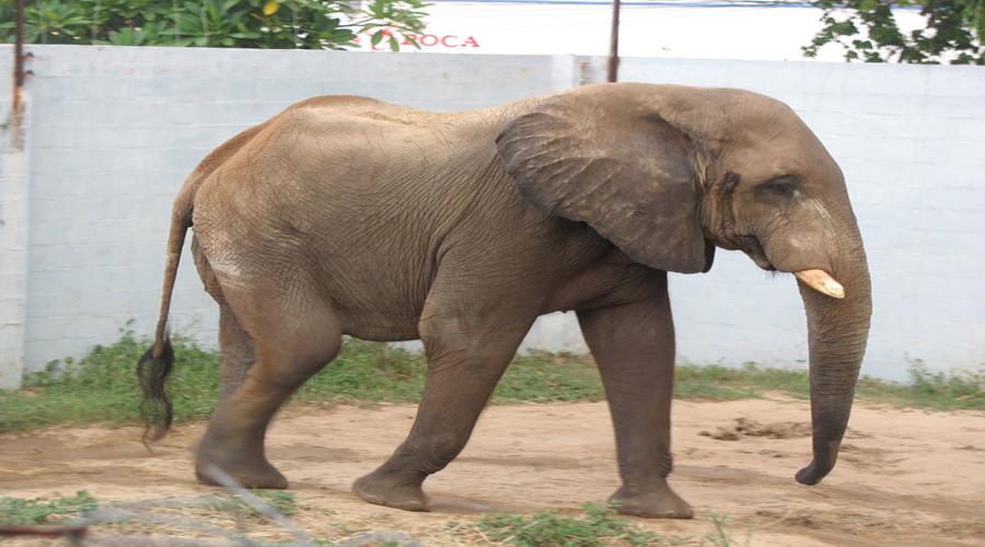 Vídeo: Un hombre se mete al recinto de elefantes en un zoológico | El Imparcial de Oaxaca