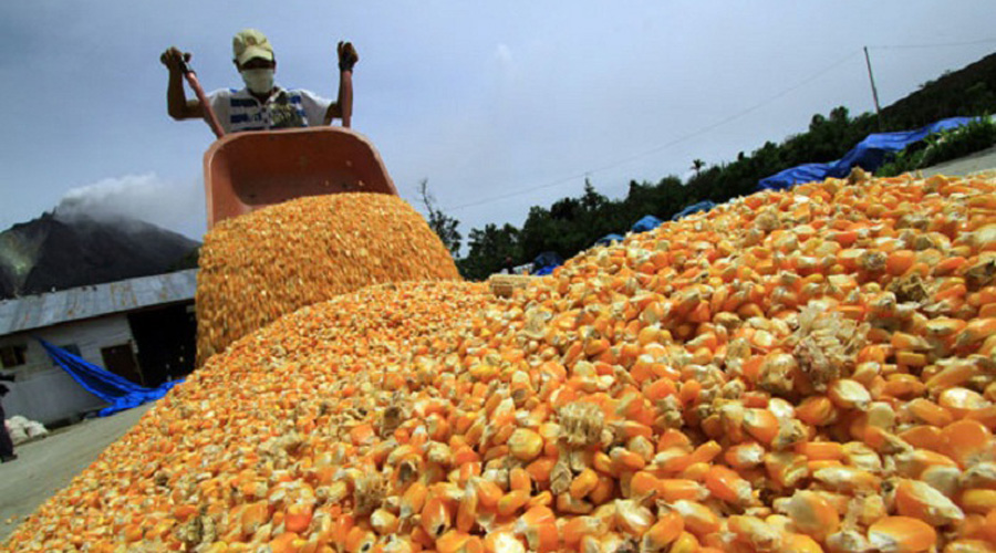 Oaxaca, séptimo en producción de maíz | El Imparcial de Oaxaca