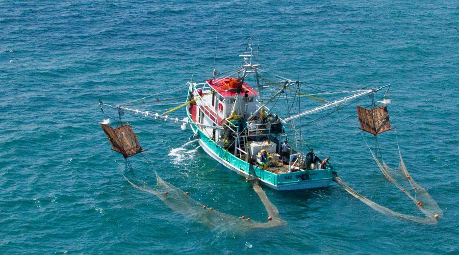 Pronostican una buena temporada de camarón   El Imparcial de Oaxaca