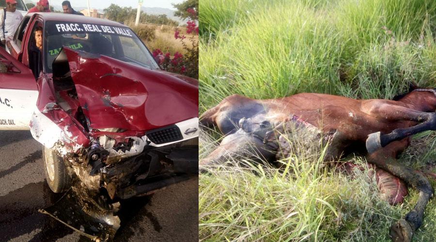 Taxi foráneo choca con caballo; animal muere destrozado   El Imparcial de Oaxaca