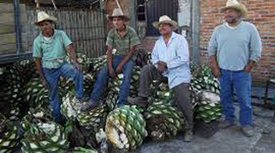 Mezcaleros  en Oaxaca interponen controversia  ante la SCJN   El Imparcial de Oaxaca