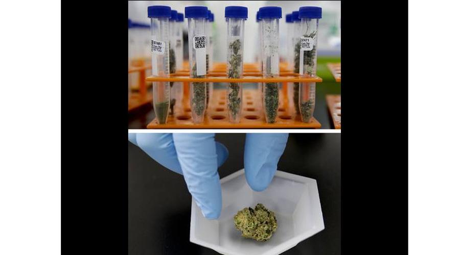 Aprueban en EU importar extractos de mariguana de Canadá para pruebas clínicas | El Imparcial de Oaxaca