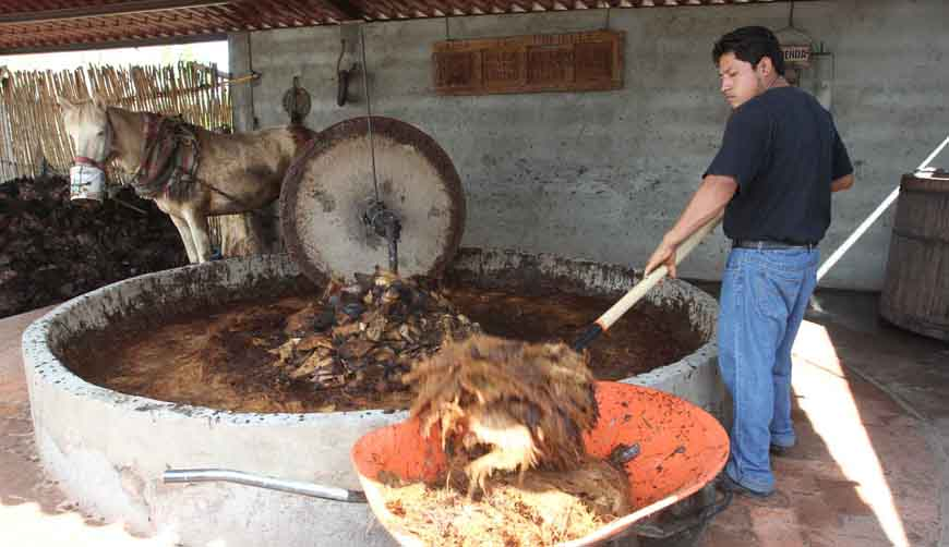 Buscan productores de mezcal y gobierno de Oaxaca defender la bebida | El Imparcial de Oaxaca