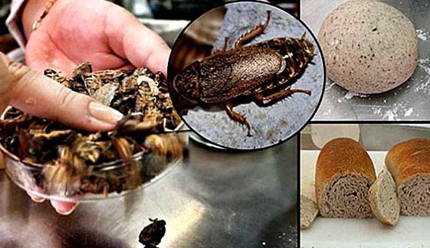 Elaboran pan a base de cucarachas que contiene más proteína que carne roja | El Imparcial de Oaxaca