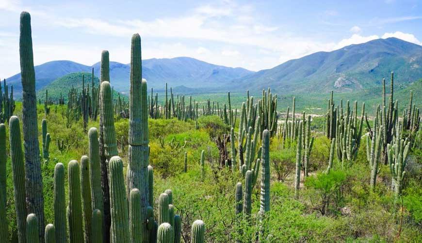 Fortalecen acciones para  proteger riqueza natural de Oaxaca | El Imparcial de Oaxaca