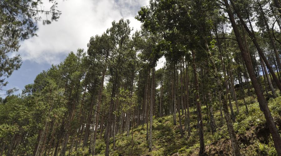Carece Oaxaca de una adecuada legislación en materia ambiental | El Imparcial de Oaxaca