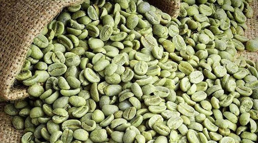 Granos de café verde, efectivos en el control de peso   El Imparcial de Oaxaca