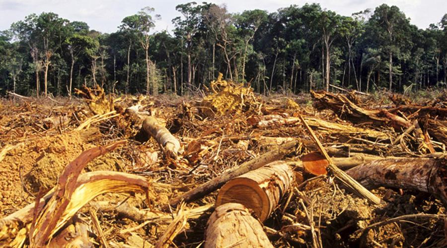 Afectan a bosques de Oaxaca prácticas agropecuarias inadecuadas   El Imparcial de Oaxaca