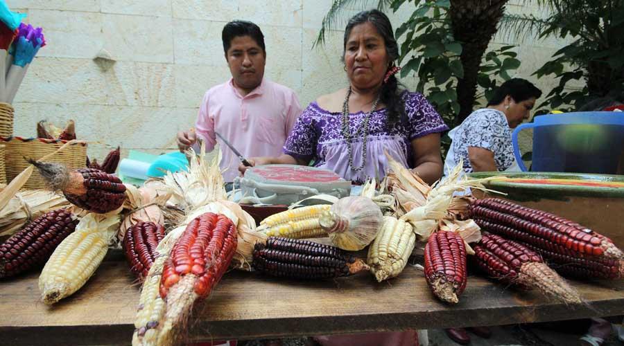 Reafirman que maíz criollo pertenece a pueblos oaxaqueños | El Imparcial de Oaxaca