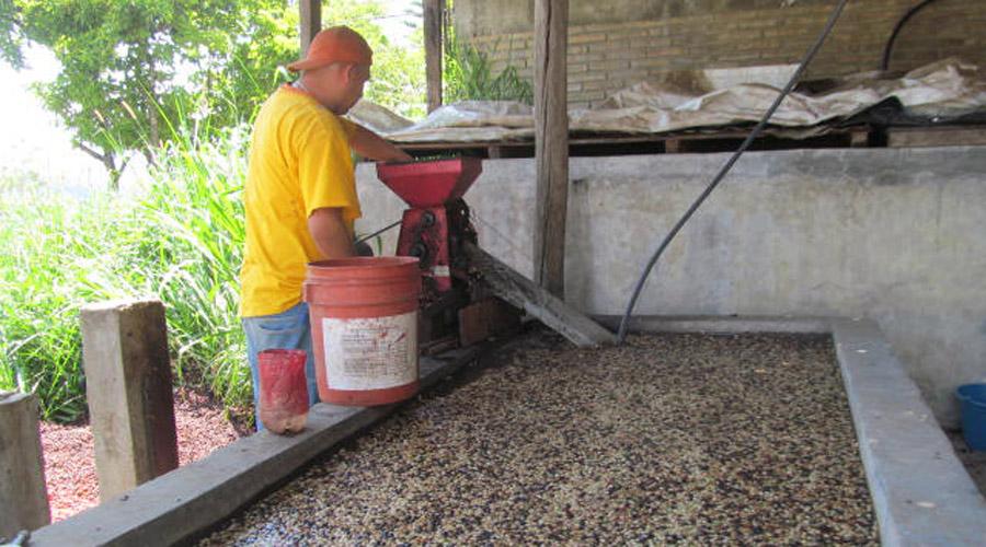 Preparan plan estratégico para el rescate del café en Huautla | El Imparcial de Oaxaca
