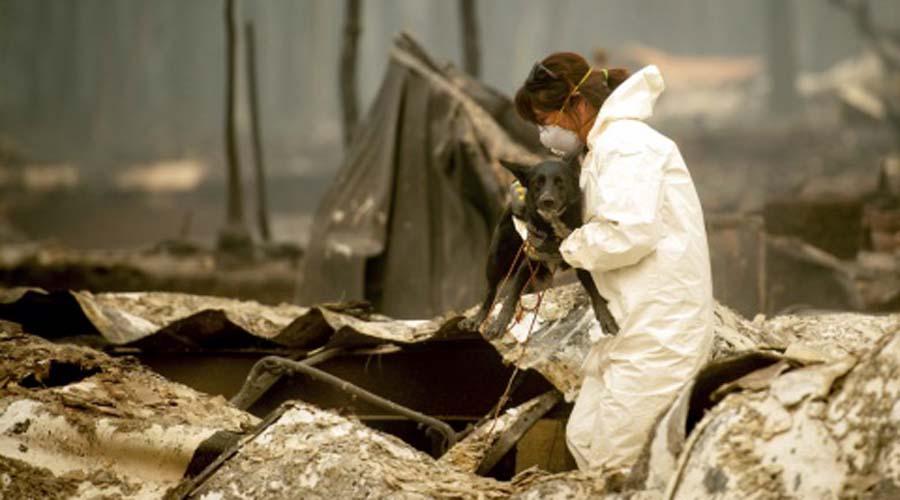 California no puede contra los incendios; van 56 muertos | El Imparcial de Oaxaca