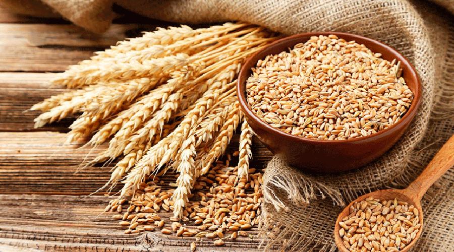 Germen de trigo previene enfermedades del corazón   El Imparcial de Oaxaca