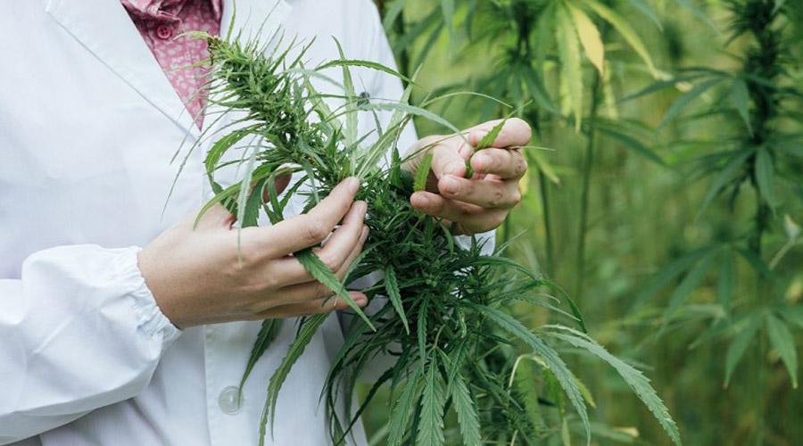 Dueña de Marlboro compra 45% de firma canadiense de cannabis | El Imparcial de Oaxaca