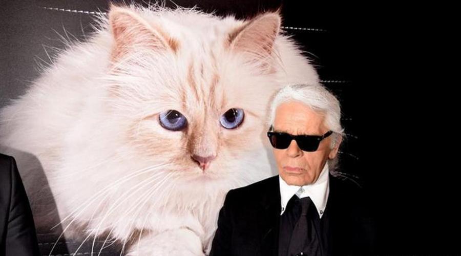 Luto en el mundo de la moda: muere Karl Lagerfeld a los 85 años   El Imparcial de Oaxaca