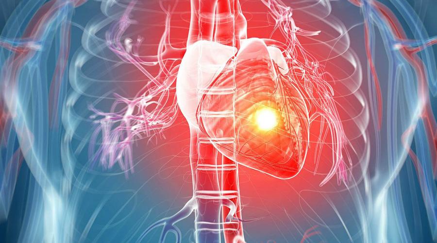 Dañaría el tejido cardiaco de mamíferos, la sangre caliente: estudio   El Imparcial de Oaxaca