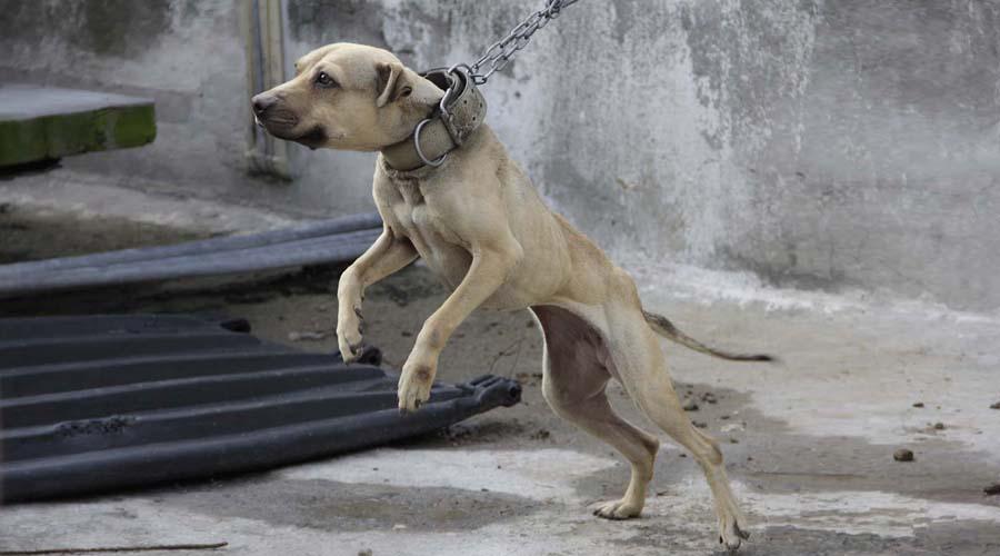 Sancionará municipio de Oaxaca el maltrato animal | El Imparcial de Oaxaca