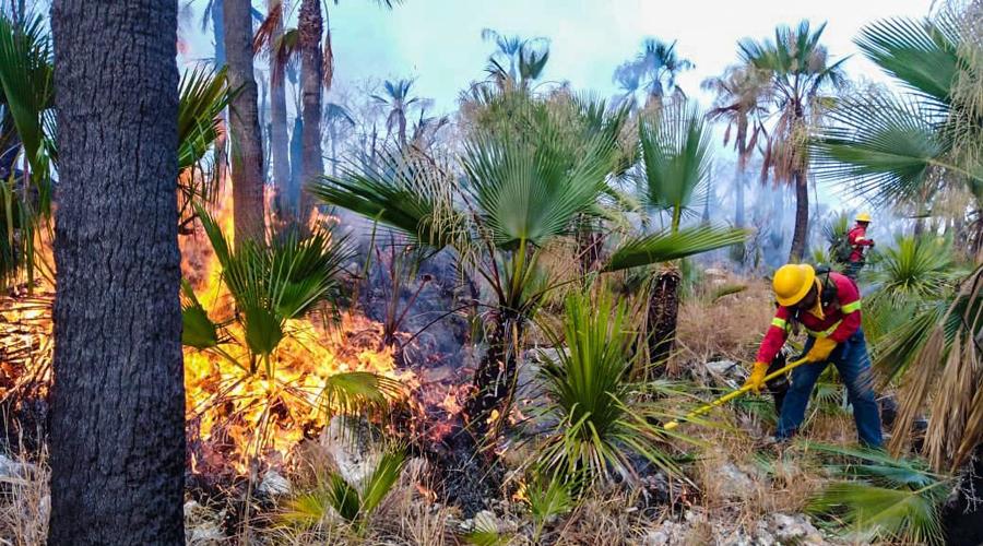 Devastan 111 incendios más de seis mil 600 hectáreas en Oaxaca   El Imparcial de Oaxaca