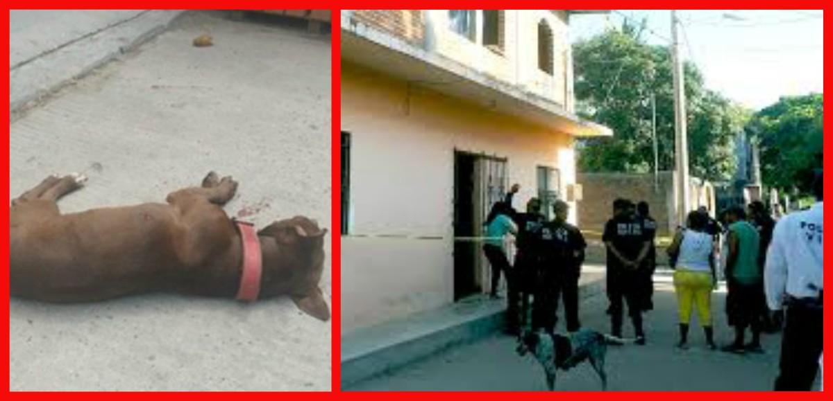 Identifican a víctimas de crimen donde mataron hasta al perro en Juchitán | El Imparcial de Oaxaca