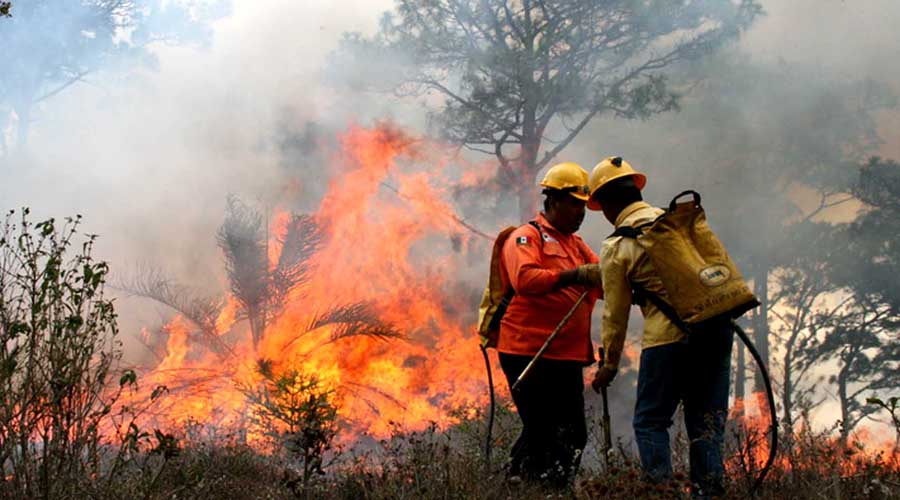 Trabaja Conafor para controlar tres incendios en Guelaguichi | El Imparcial de Oaxaca