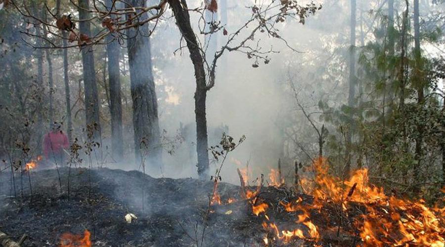 Persiste incendio en los Chimalapas, Oaxaca | El Imparcial de Oaxaca