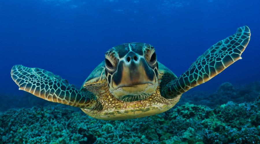 Gana CEMDA amparo para proteger a tortugas en las costas de Oaxaca | El Imparcial de Oaxaca