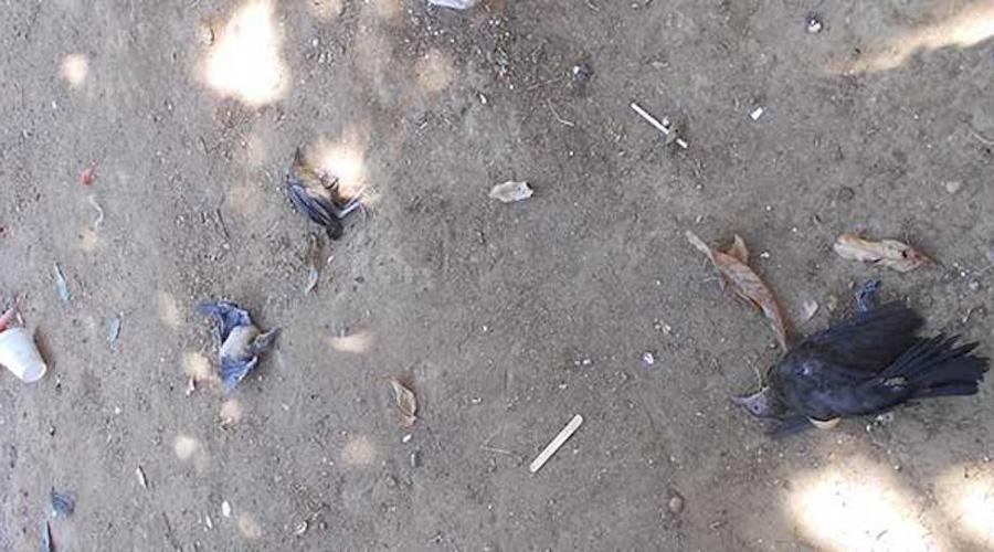 Debido a las altas temperaturas caen aves muertas | El Imparcial de Oaxaca