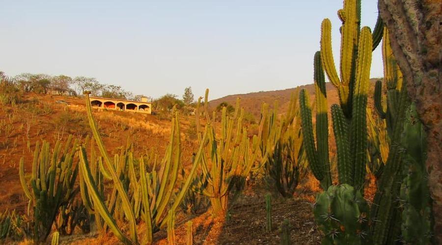 Exportan pitaya  como fruta poblana | El Imparcial de Oaxaca