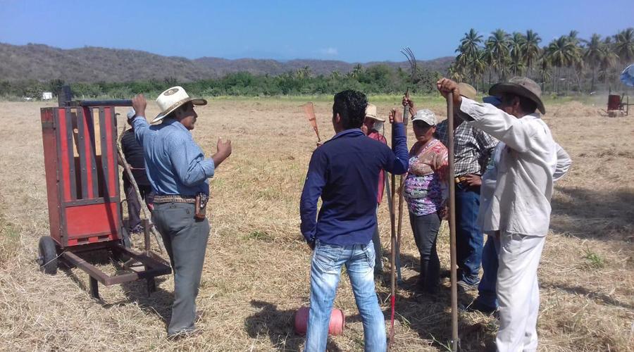 Ganaderos de la Costa buscan mejorar alimento para su ganado   El Imparcial de Oaxaca
