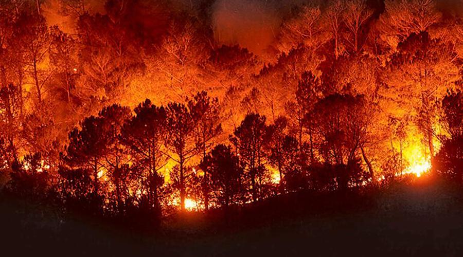 Catalogan incendios forestales como fenómenos típicos | El Imparcial de Oaxaca