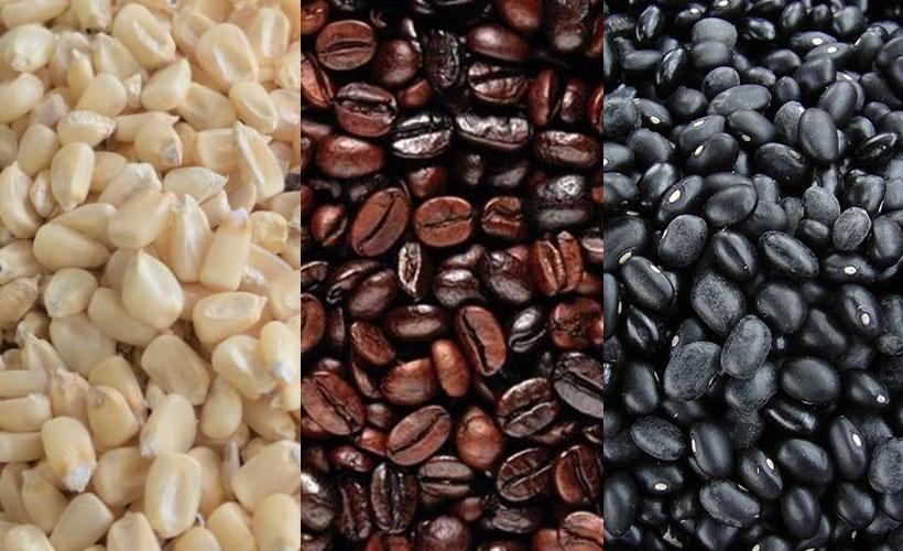 Cae drásticamente producción de café, maíz y frijol en Oaxaca   El Imparcial de Oaxaca