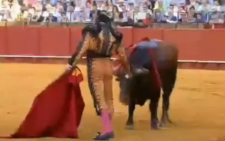 Video: Torero limpia lágrimas de un toro momentos antes de matarlo   El Imparcial de Oaxaca
