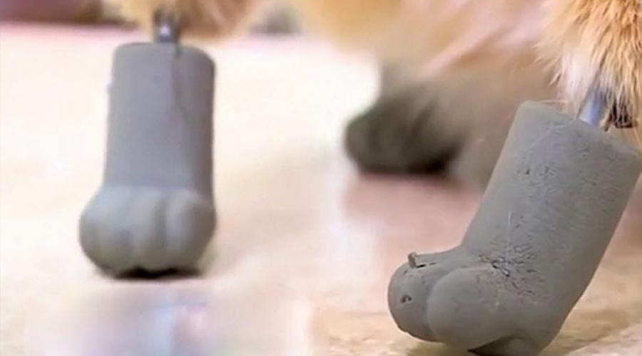 Video: Conoce al primer gato biónico; tiene cuatro patas de titanio | El Imparcial de Oaxaca