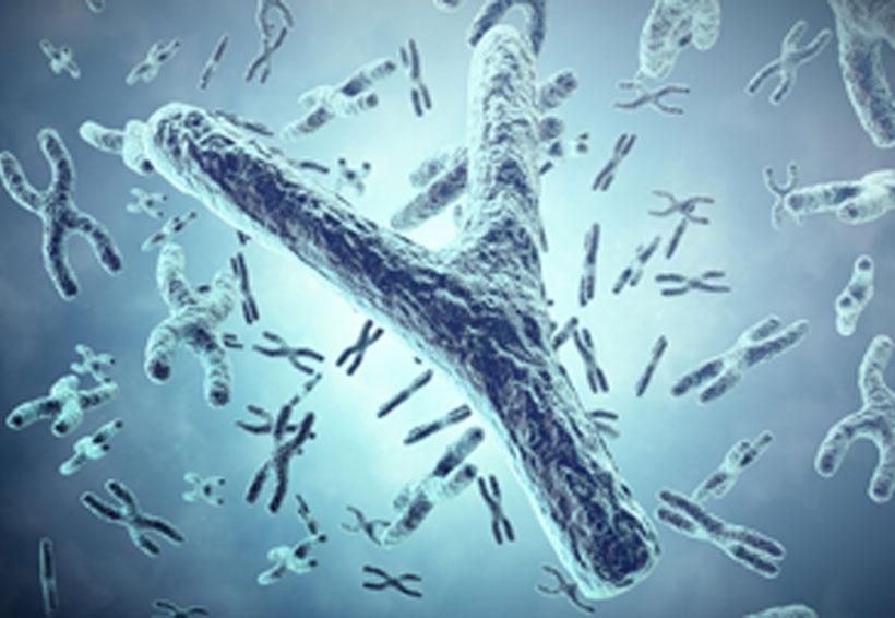 Cromosoma masculino se debilita; evolución le ha restado genes   El Imparcial de Oaxaca