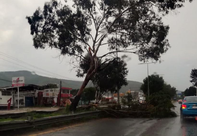 Capacitación en Oaxaca, vital para enfrentar los desastres naturales | El Imparcial de Oaxaca